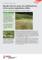 Bandes fleuries pour les pollinisateurs et les autres organismes utiles