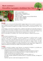 Arbres fruitiers – groseillier