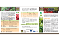 Fiche_Technique_La production de petits fruits rouges_Sud et Bio_2013