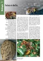 118_frelons_abeilles