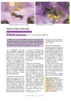 ABEILLES_Chélostomes et campanules
