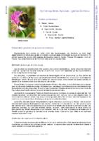 Apidae genre Bombus