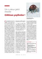 Gibbium psylloides