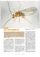 INSECTES_Psocoptères
