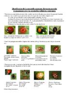 Identification de la coccinelle asiatique Harmonia axyridis