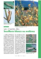 Les insectes des molenes