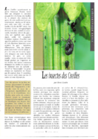 Les insectes des oseilles