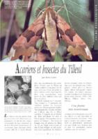 Les insectes des tilleuls
