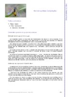 Presentation generale du groupe des symphytes