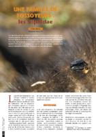 Une famille de fossoyeurs-les Silphidae