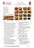 coccinelle-asiatique-harmonia-axyridis