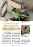 les-nids-abeilles-solitaires-et-sociales