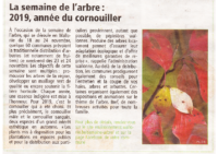 cornouiller-semaine-arbre-2019