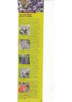 verger_plantes-melliferes_pour_auxilliaires